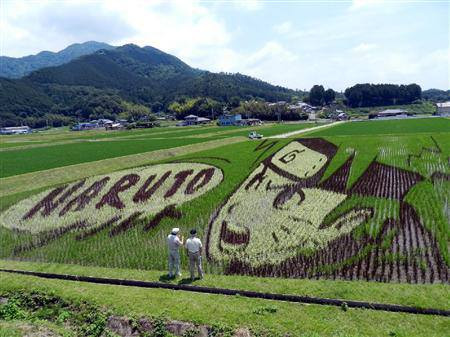 naruto rice field